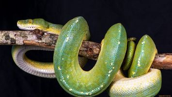 Photo free snake, green, head