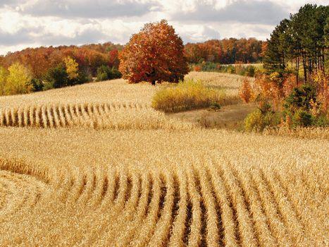 Фото бесплатно поле, пшено, круги