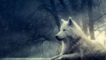 Бесплатные фото лес,белый,волк,снег