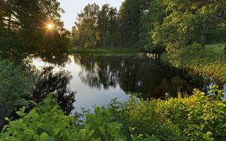 Бесплатные фото деревья,лес,солнце,трава,река,пруд,вода