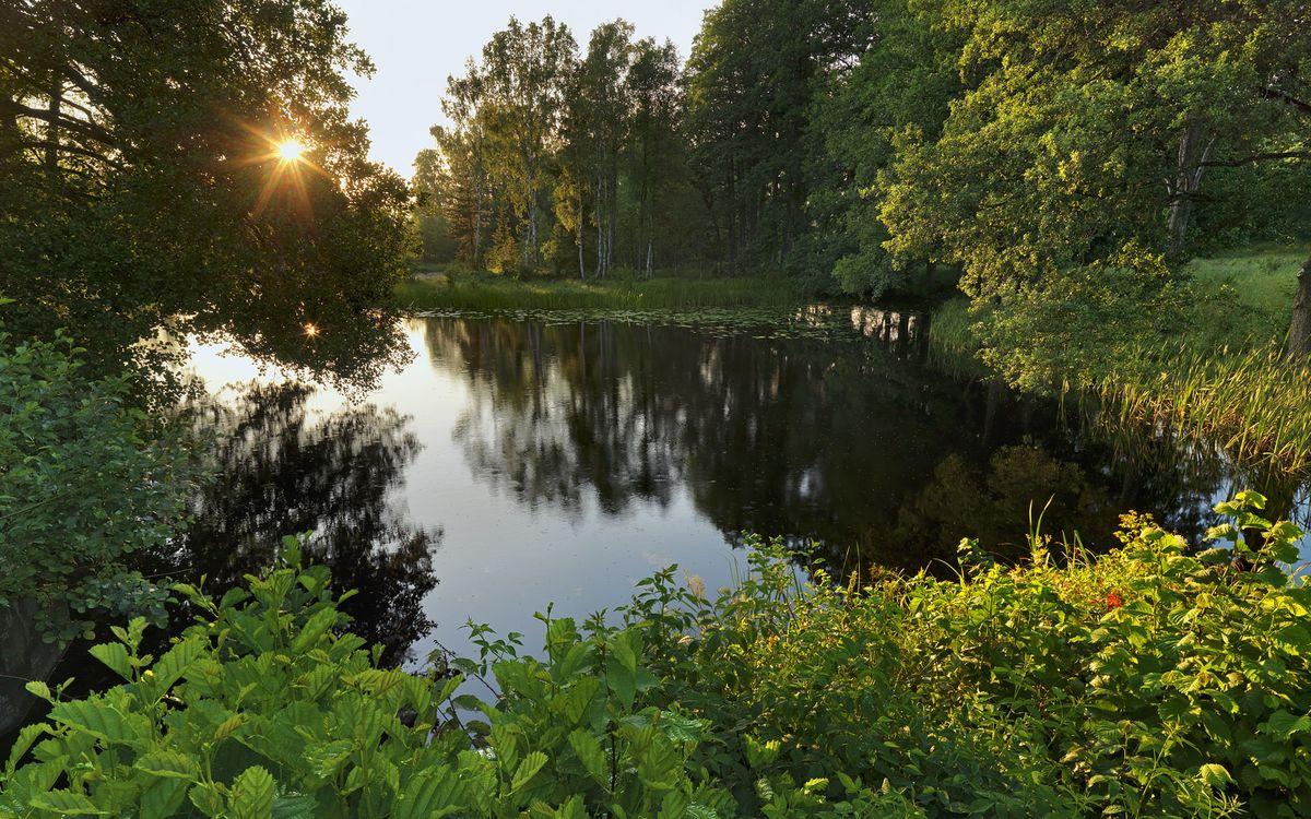 Фото бесплатно деревья, лес, солнце, трава, река, пруд, вода, отражение, кусты, зелень, закат, природа, природа