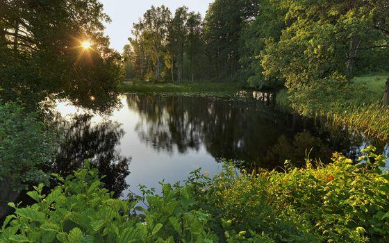 Фото бесплатно отражение, солнце, лес