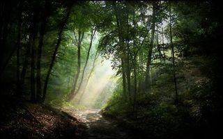 Фото бесплатно лесная дорога, деревья, листья