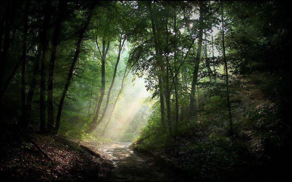 Фото бесплатно лесная дорога, деревья, листья - на рабочий стол