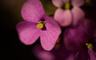 Бесплатные фото лепестки,цветок,листья,тычинка,розовый,лето,весна