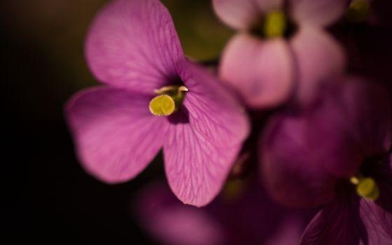 Бесплатные фото лепестки,цветок,листья,тычинка,розовый,лето,весна,цветет,цветы