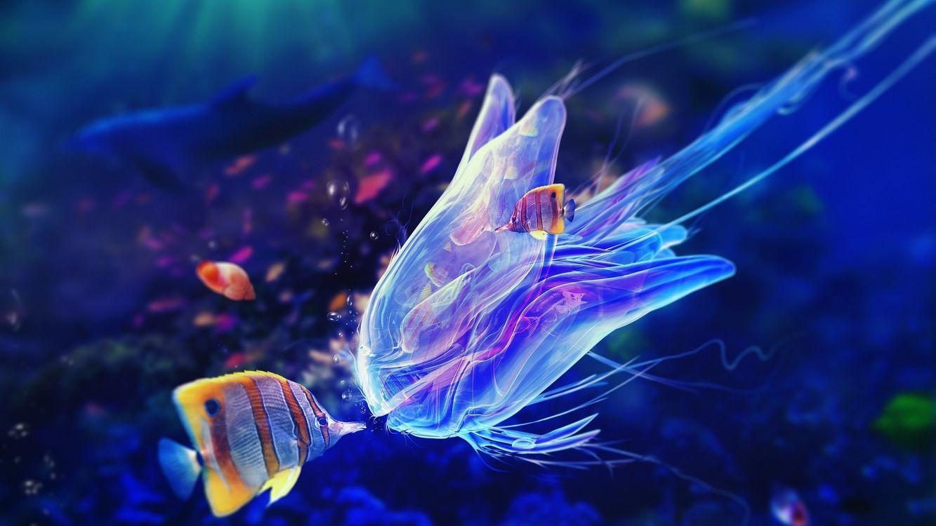 Фото бесплатно медуза, рыбы, дельфин, глубина, океан, вода, пузыри, подводный мир, подводный мир