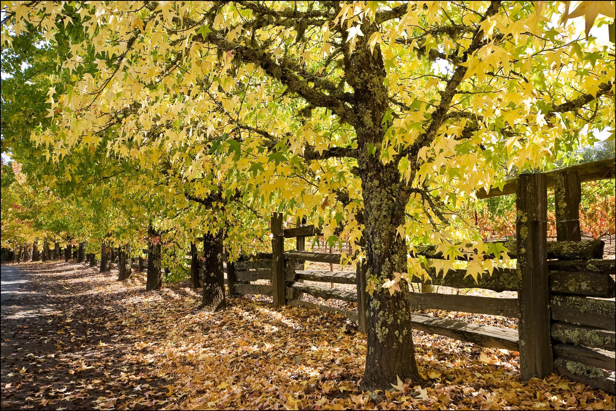 Обои осень, тропа, тропинка, деревья