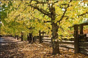 Бесплатные фото осень,тропа,тропинка,деревья,дорога,забор,природа