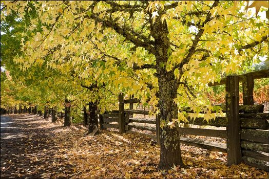 Photo free fence, autumn, path