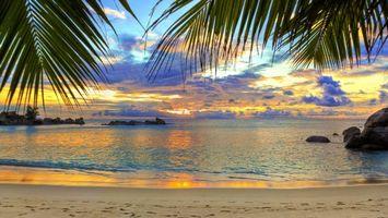Фото бесплатно пальмы, ветки, листья, берег, пляж, песок, следы, волны, море, океан, вода, пейзажи