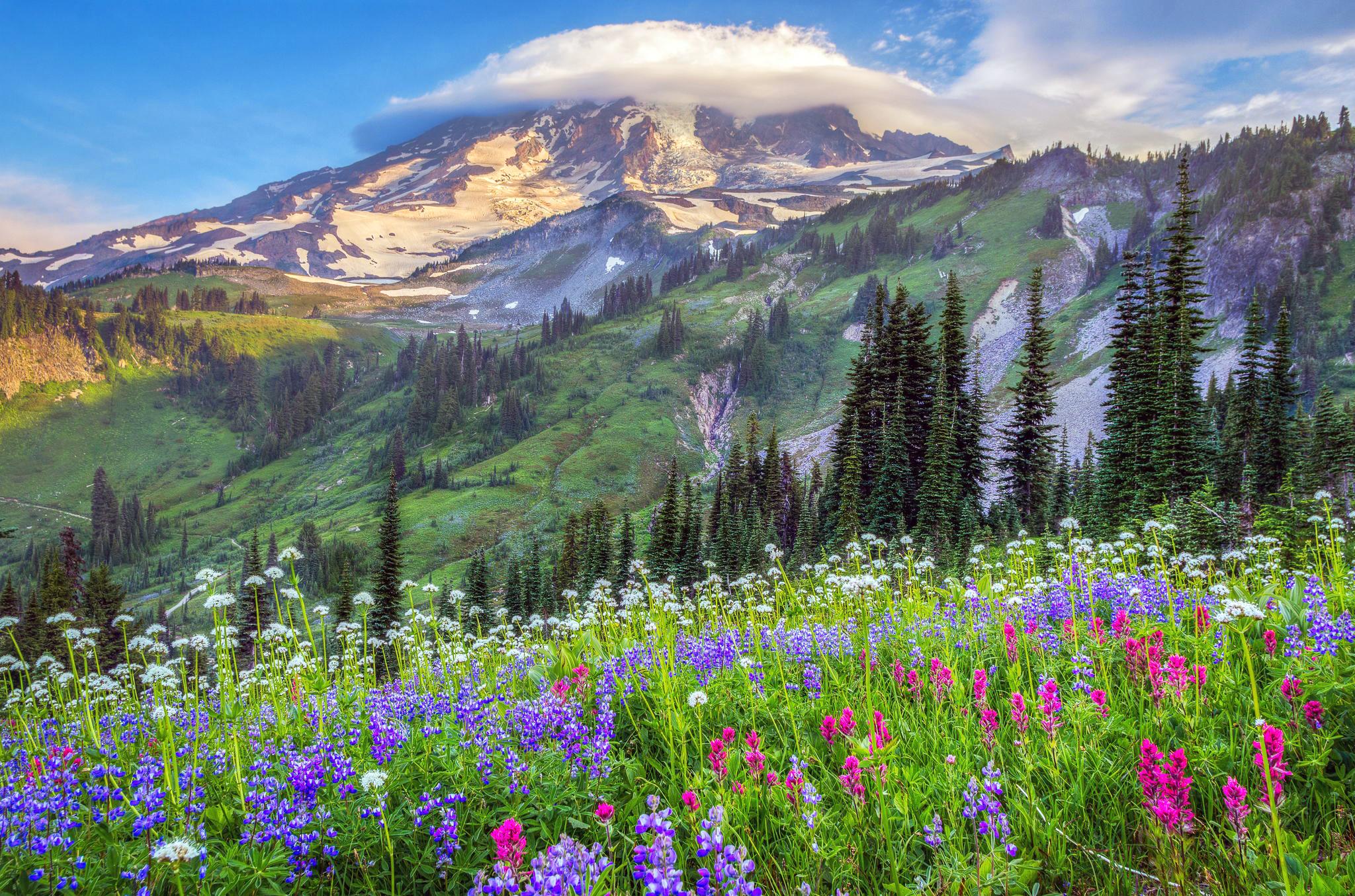 поляна цветы трава холмы горы glade flowers grass hills mountains  № 1829170  скачать