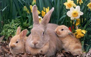 Фото бесплатно семья, кролики, уши, морды, цветы, листья, животные