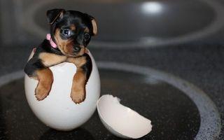 Фото бесплатно скорлупа, щенок, морда