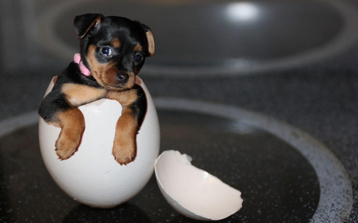 Фото бесплатно скорлупа, щенок, морда, лапы, шерсть, ошейник, собаки