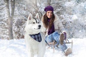 Фото бесплатно хаски, упряжка, снег