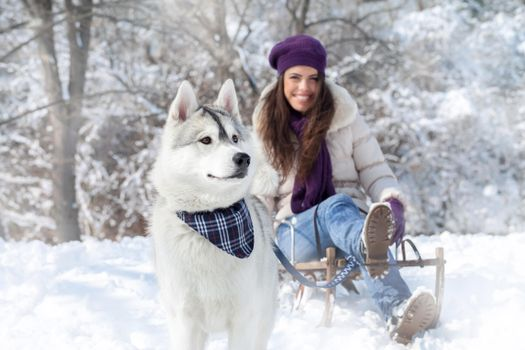 Photo free husky, harness, snow