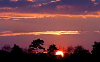 Фото бесплатно солнце, лес, облака
