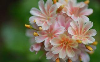 Заставки цветки,лепестки,листья,бутоны,ветка,стебель,цветы