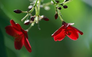 Заставки цветки,лепестки,листья,ветки,бутоны,ворсинки,цветение