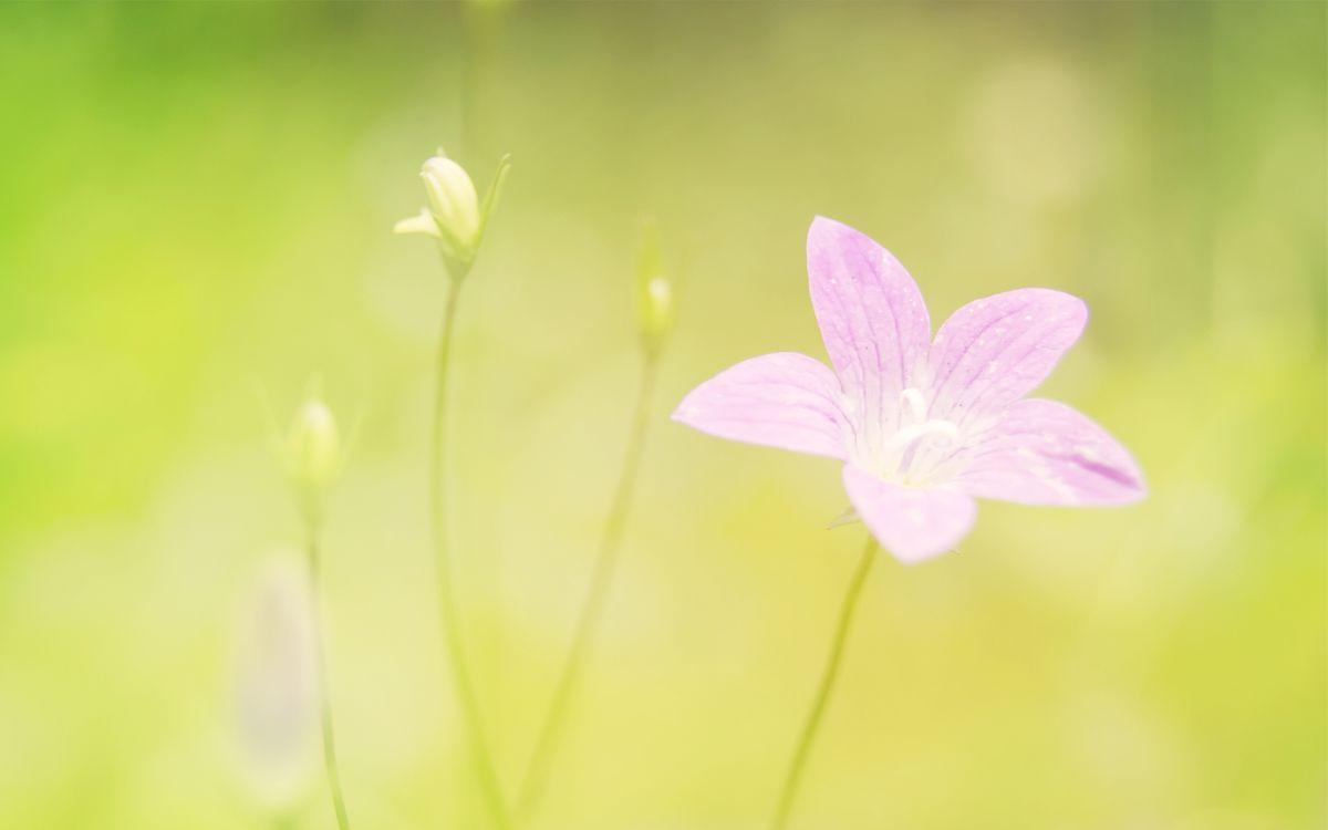 Фото бесплатно розовый, цветок, стебли - на рабочий стол