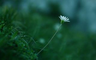 Фото бесплатно цвет, белый, трава