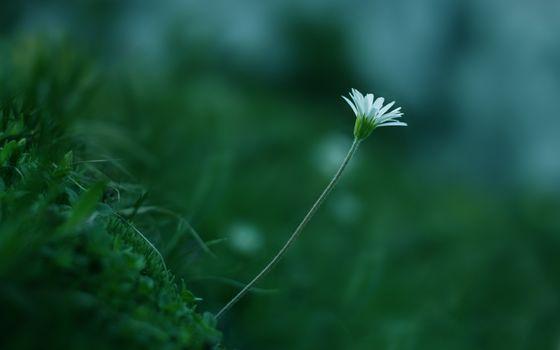 Бесплатные фото цвет,белый,трава,стебель,зелень,цветок,растение