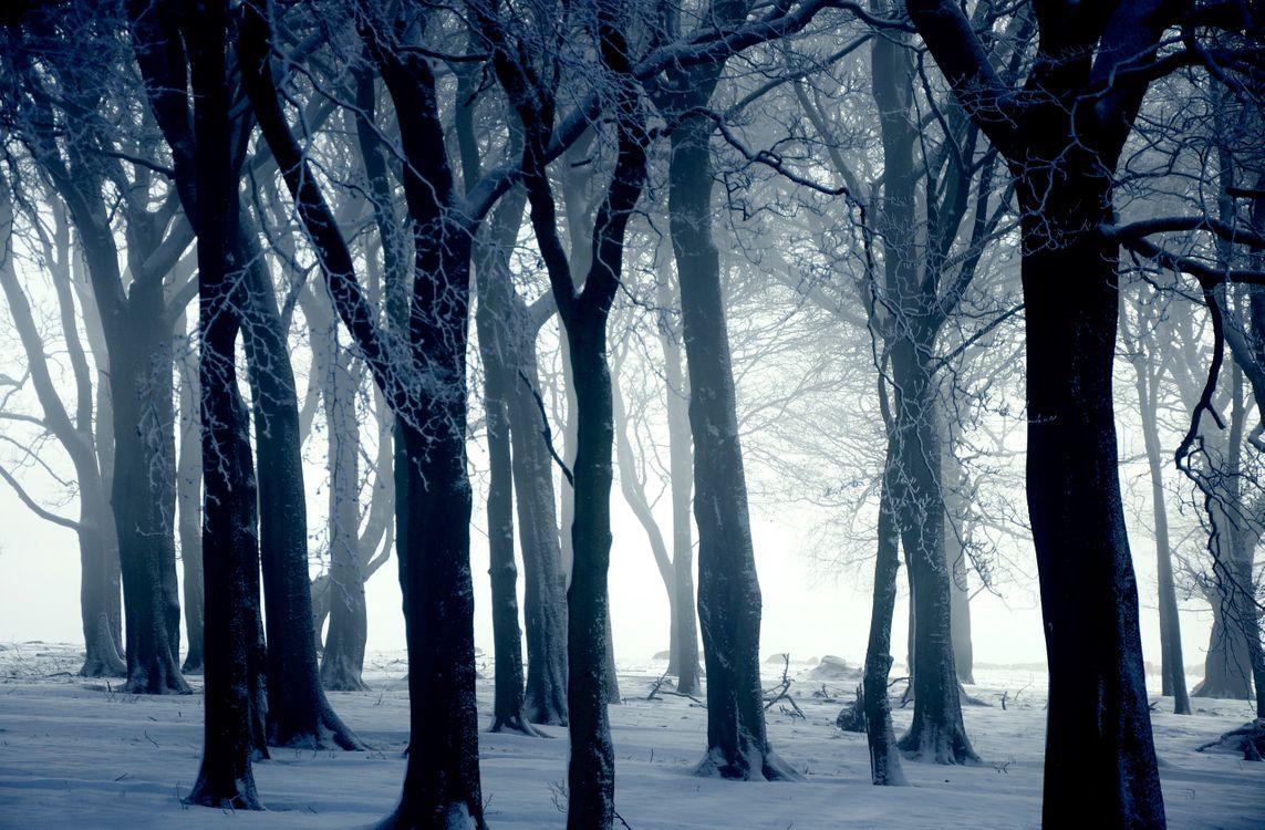 Фото бесплатно зимний лес, деревья, снег, природа, природа