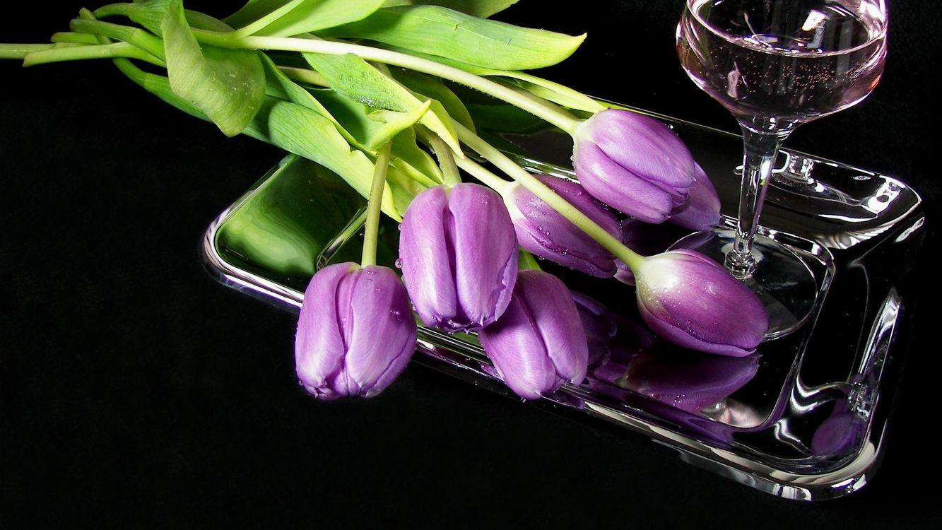 Фото бесплатно цветы, сиреневые, бокал, поднос, разное