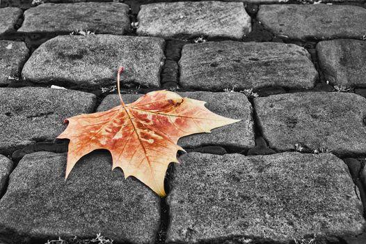 Фото бесплатно лист клена, очень, тротуар