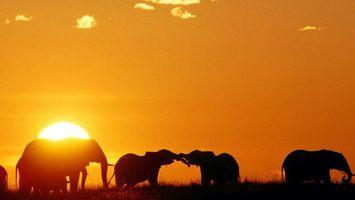 Бесплатные фото африка,закат,солнце,силуэты,слоны,животные