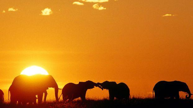 Фото бесплатно африка, закат, солнце