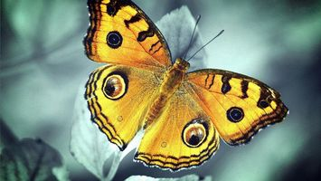 Photo free butterfly, yellow, wings