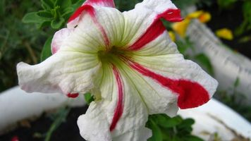 Бесплатные фото цветок,природа,лето,абстракции,разное,цветы