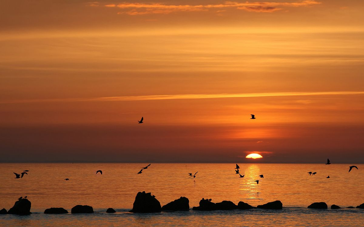 Фото бесплатно закат, солнце, океан, облака, горизонт, чайки, птицы, природа, природа