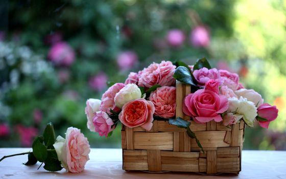 Фото бесплатно пионы, карзинка, цветов