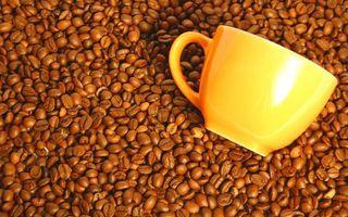 Бесплатные фото кофе,зерна,чашка,кружка,ручка,желтый,цвет