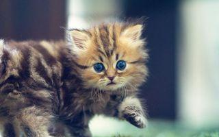 Заставки котенок, пушистый, глаза