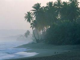 Бесплатные фото море,вода,волны,песок,пальмы,небо,природа
