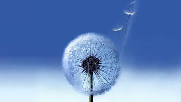 Заставки одуванчик, белый, семена, пух, полет, стебель, зеленый