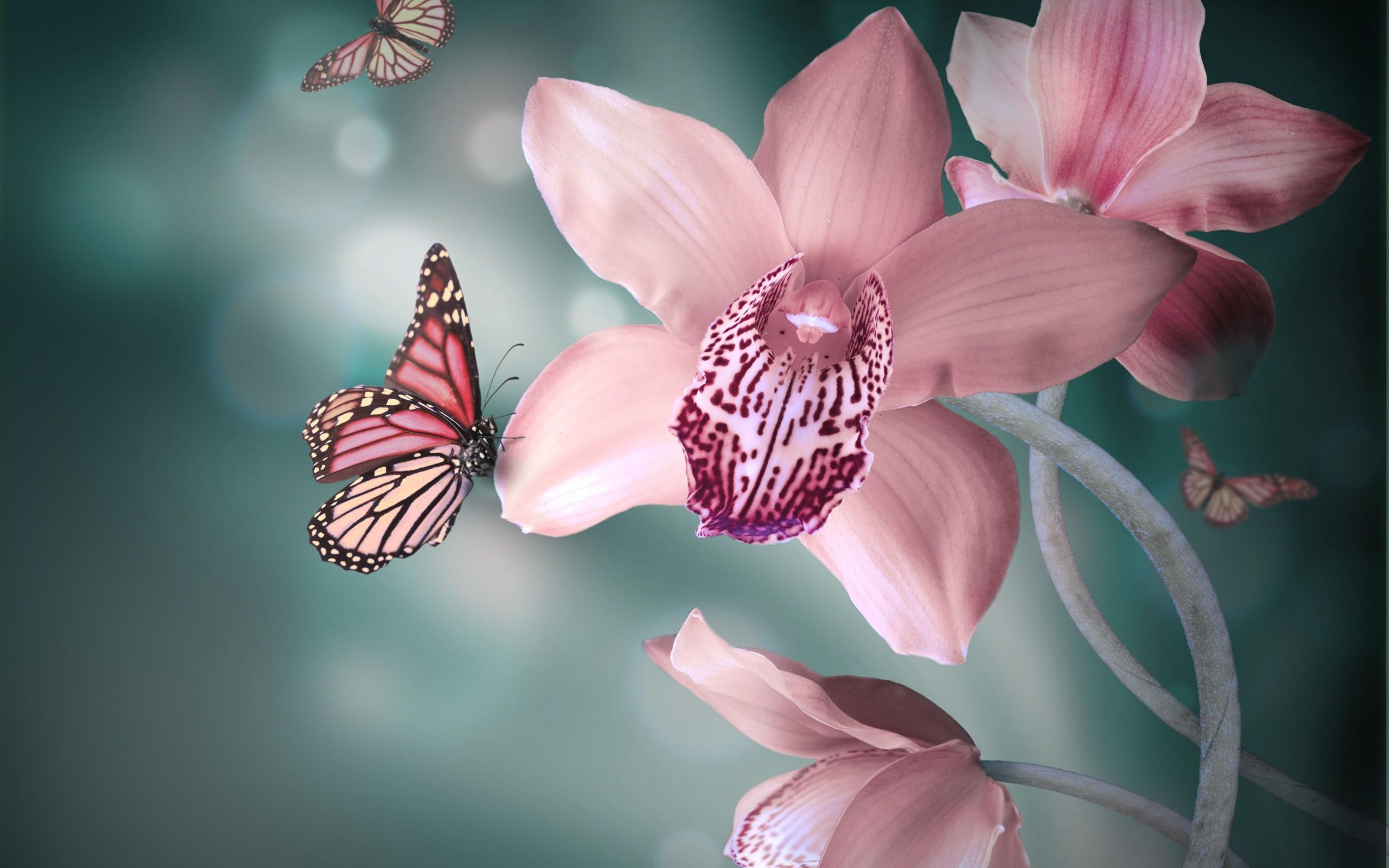 орхидеи, бабочки, крылья