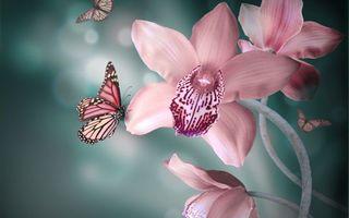 Заставки орхидеи, бабочки, крылья, раскраска, лепестки, нектар, макро