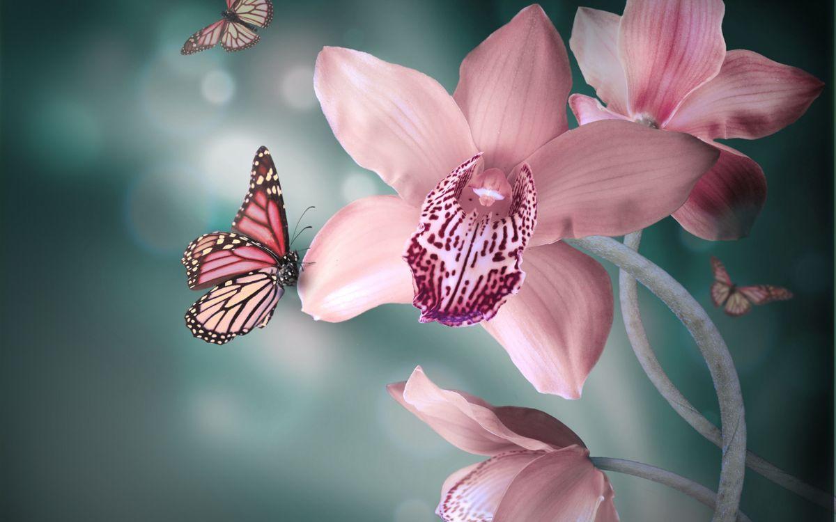 Фото бесплатно орхидеи, бабочки, крылья - на рабочий стол