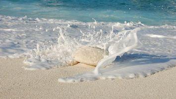 Фото бесплатно пляж, песок, пена