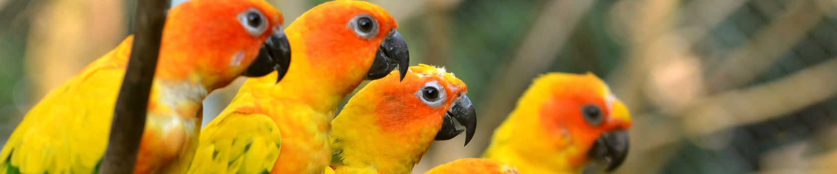 Фото бесплатно попугаи, желтый, окрас