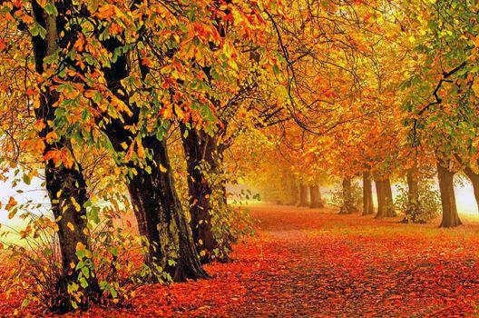Фото бесплатно природа, осень, аллея