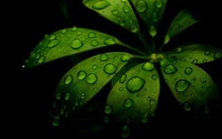 Бесплатные фото растение,листья,ветка,капли,роса,вода,фон