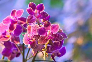 Заставки цветы, орхидеи, ветвь