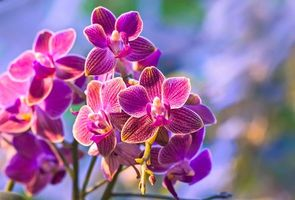 Photo free flowers, orchids, branch