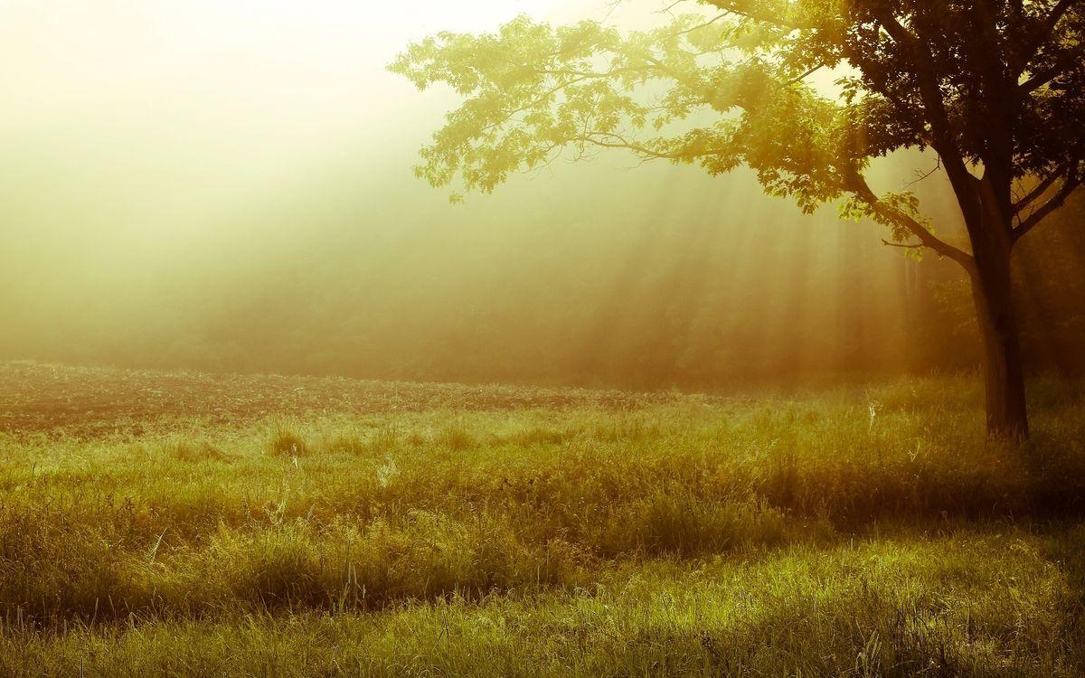Фото бесплатно утро, дерево, ветки - на рабочий стол